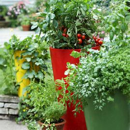 Growing-Vegetables-in-Containers